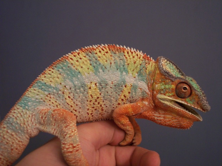 Blue Bar Ambilobe